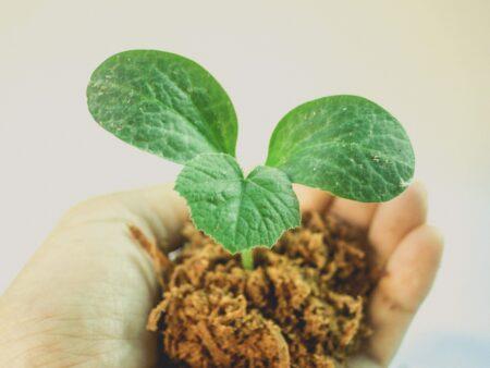 Zdrowe i ekologiczne rośliny to nasza pasja